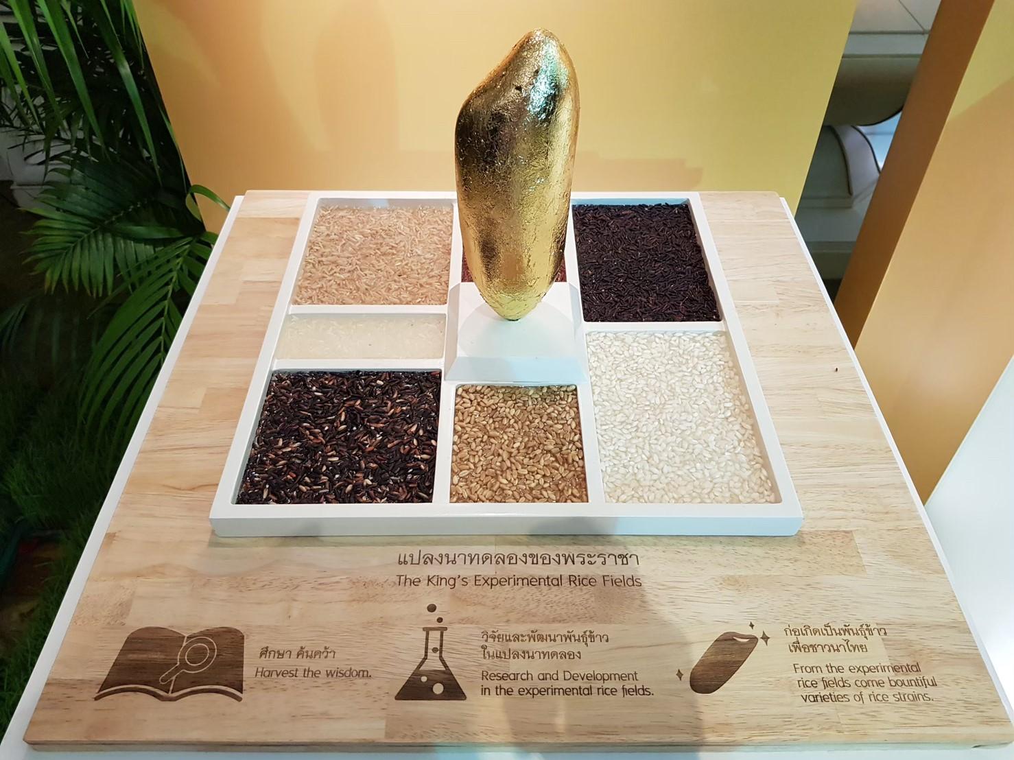 Exhibition Rice